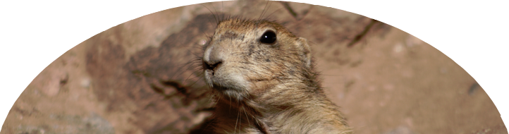 Ideas for Preschoolers: Groundhog Day